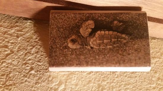 Tortuga del Mar: turtle photo on wood block purchased from motel