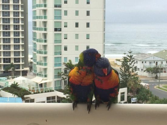 Maldives Resort : Lorakees visiting our balcony