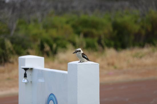 Surfpoint Resort: Kookaburra