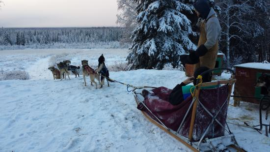 Paws for Adventure: My husband on his sled