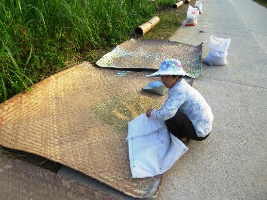 Yangmei Ancient Town: Paddy drying the olden way