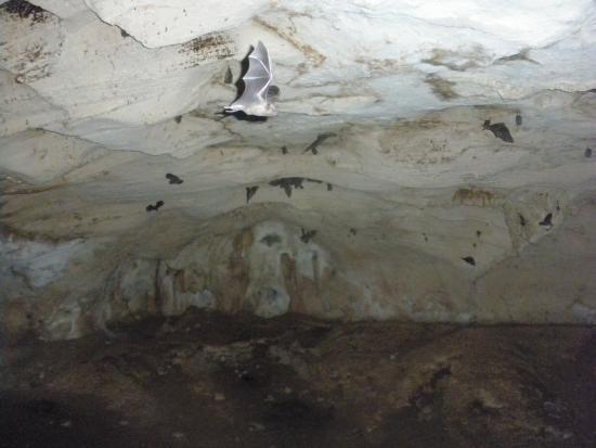 Ambrosio Cave : Bats in flight