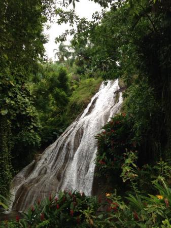 Shaw Park Gardens & Waterfalls : Shaw Park Falls