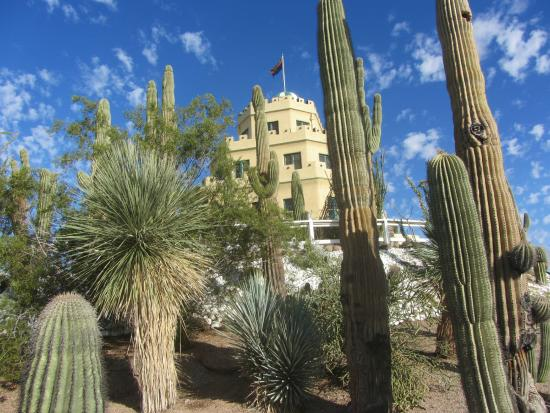 Tovrea Castle At Carraro Heights: Cactus Garden Covers The Property   This  Is The South