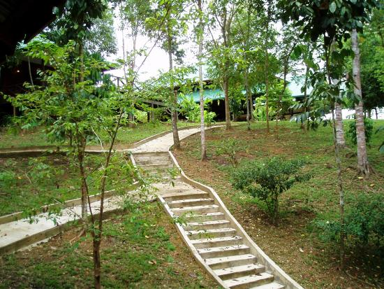 Proboscis Lodge Bukit Melapi: Walkway from the jetty to the main building