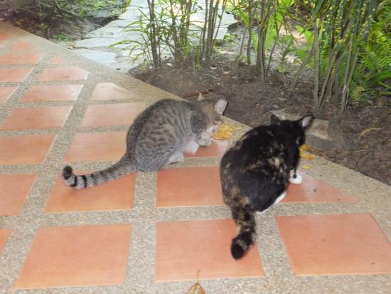 Palm Garden Resort Phuket : Bungalow-Security