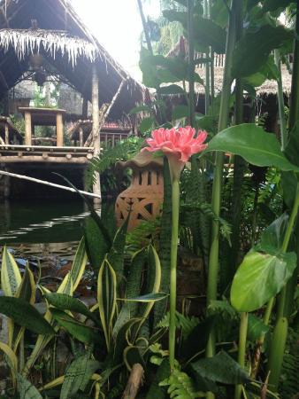 Frog and Catfish: Gorgeous plants and flowers to enjoy