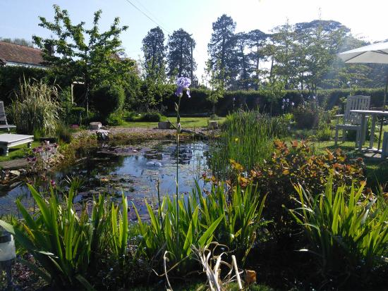 Somerset Bed and Breakfast: Pond in Guests' Garden