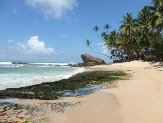 Sri Gemunu Beach Resort: Strandbereich, Blick zum Hotel (Gelände mit Palmen)