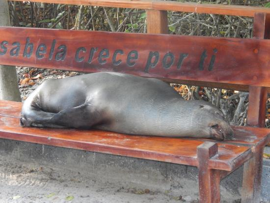 Galapagos Natural Life - Day Tours: This is who runs San Cristobol