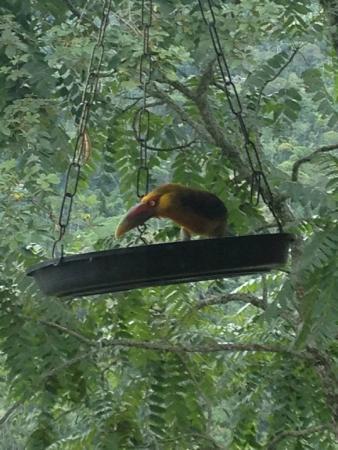 Hotel Do Ype: Pássaros exóticos vem tomar café da manhã com os hóspedes