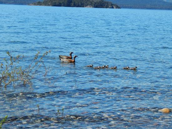 Muguet: En el Lago....