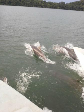 La Cocaleca - Isla Boca Brava Day Tour: delfines bahia muertos