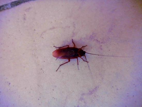 Jasmine Village Hotel : Mein Sohn 2 1/2 Jahre hielt das für einen Käfer
