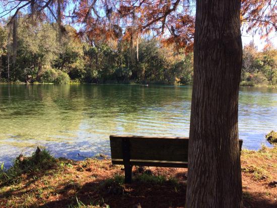 Alexander Springs: My favorite spot to sit.