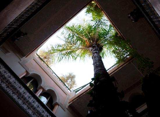 Riad Celia : Il cortile con la Palma