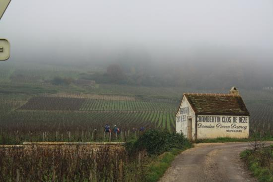 Wine and Voyages: Wine Tour