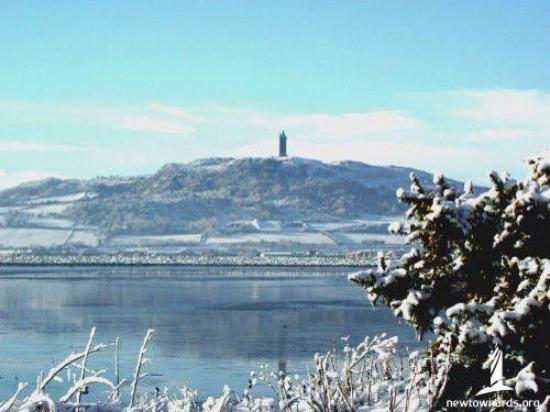 View of Scrabo Tower Newtownards