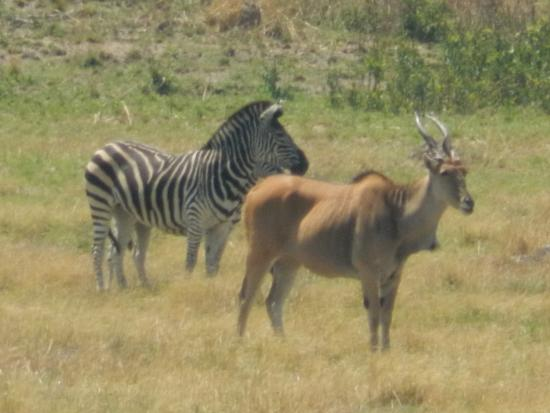 Mukuvisi Woodlands: zebras in the sun