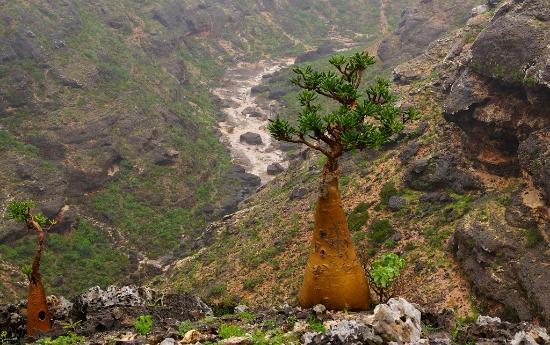www.YemenExplorer.com