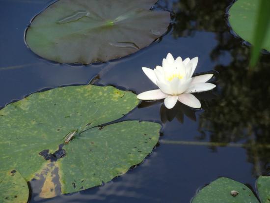 Botanical Gardens of Strasbourg University: Ambiance zen