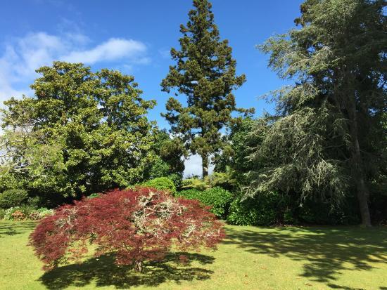 88 Lodge Luxury Bed and Breakfast: Jardin