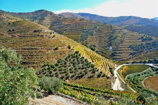 Quinta do Vale Dona Maria : Douro Valley