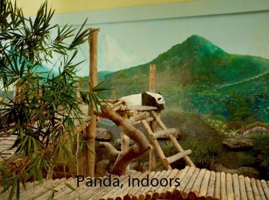 Panda House inside panda house, chaing mai zoo - picture of chiang mai zoo
