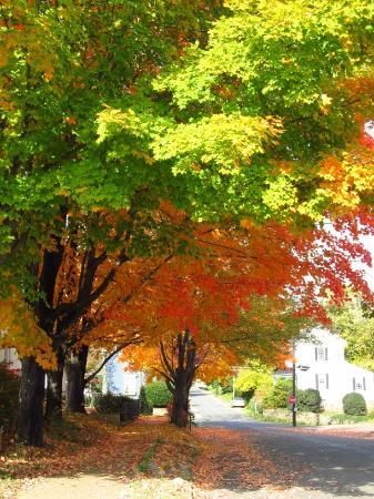 Ουάσιγκτον, Βιρτζίνια: Foliage view from restuarant