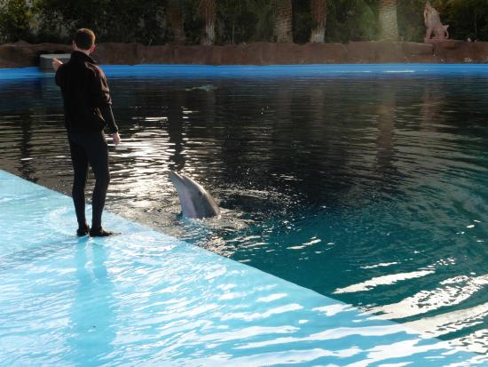 Dolphin Picture Of Siegfried Roy 39 S Secret Garden And