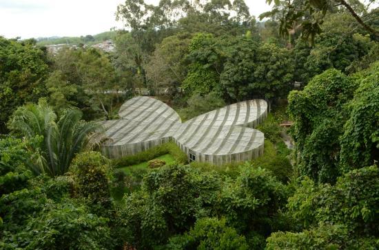 Jardin Botanico del Quindio: La mariposa más grande del mundo