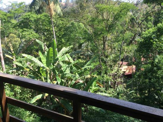 Pousada Shangrilla: Vista da natureza