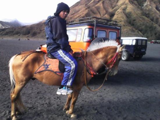 Bali Go Beyond Tours - Day Tours: On Horseback to Mount Bromo