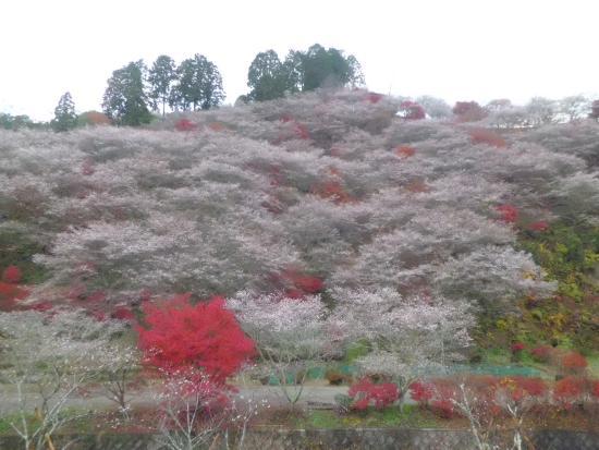 Obara Fureai Park / Shikizakura: 川見薬師寺