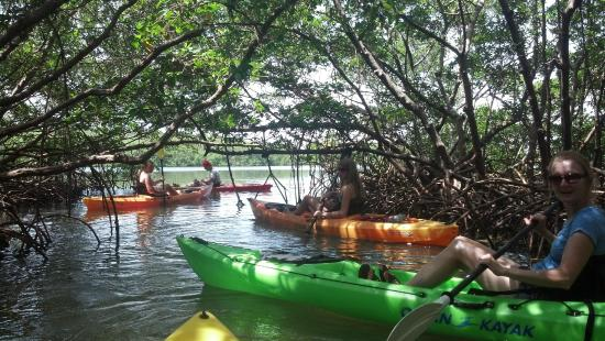 Sea Life Kayak Adventures: beautifull mangrove tunnels