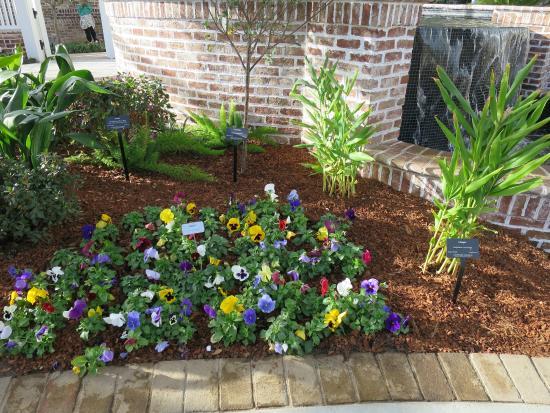 Lauritzen Gardens Omahau0027s Botanical Center: Pansyu0027s In December