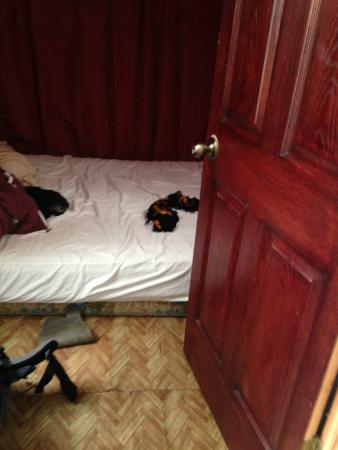 Costa Rica Love Apartments & rooms : Room was as big as the bed with no closets or space to put the stuff