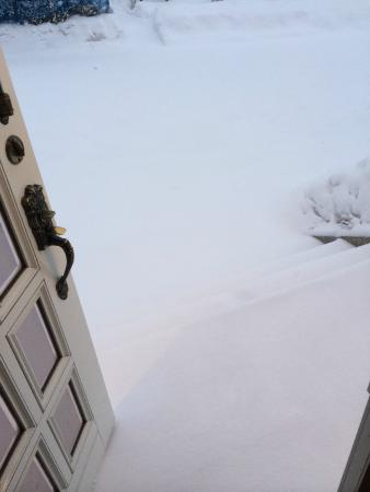Elk at Hakuba: dosent get any better then opening the door to this !