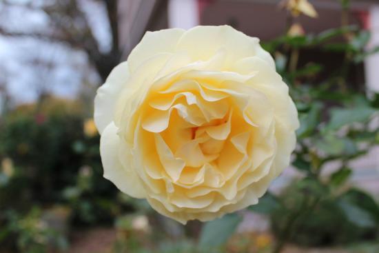 27 Blake Street: Beautiful flowers in Carolyn's gardens