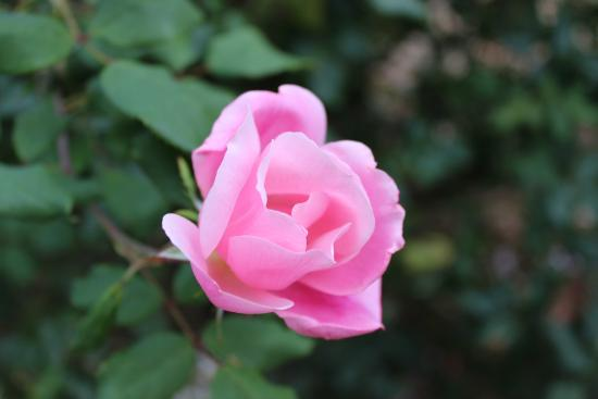 27 Blake Street Bed & Breakfast: Beautiful flowers in Carolyn's gardens