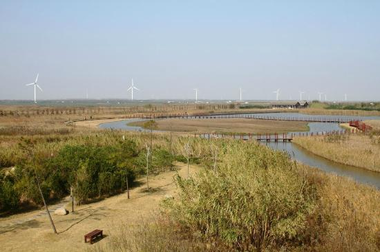 Chongming Dongtan Birds National Nature Reserve: View from the Wetlands Observation Deck