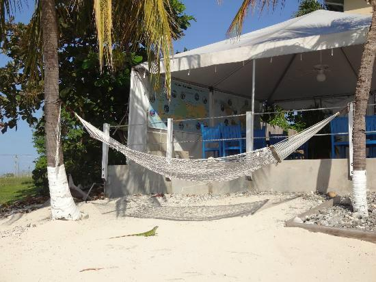 Coral Sands Resort : Hammock on the beach