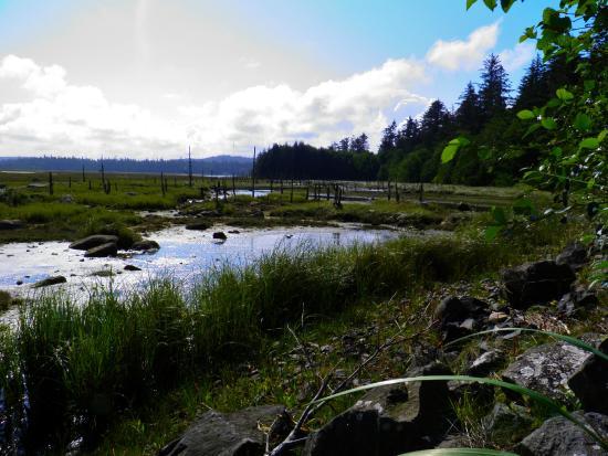 Delkatla Nature Sanctuary