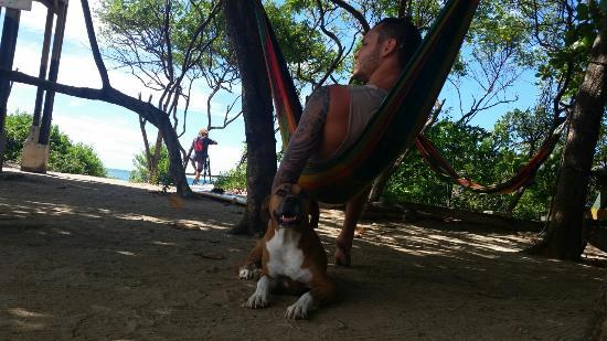 Hammock at the taco star. Friendly puppy!