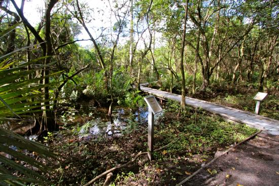 Secret Woods - Picture of Secret Woods Nature Center, Dania Beach ...