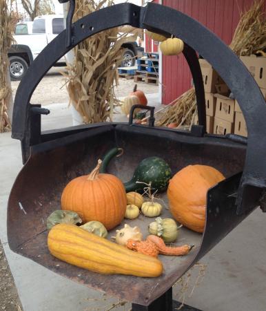 Lattin Farms : Pumpkins on an antique scale