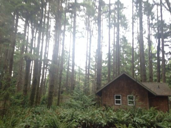 WildSpring Guest Habitat : Oh so peaceful