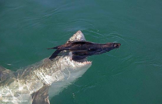 Farallon Islands Shark Diving Reviews