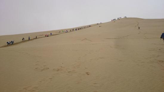 Sand Safaris Cape Reinga 90 Mile Beach Tours: Sand surfing in the dunes