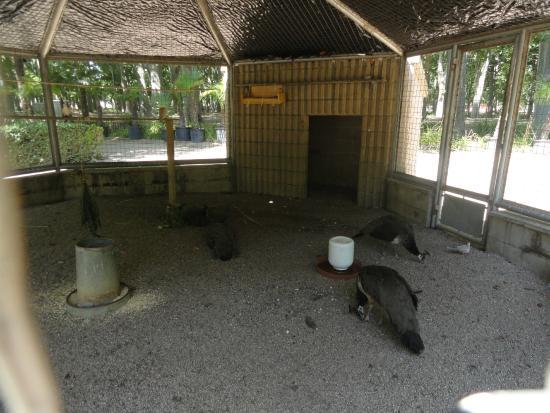 Parque de la Dehesa (Parc de la Devesa): Zona con pavos reales